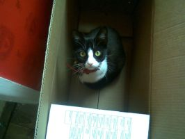 cat in the box by mephilesxdarkness