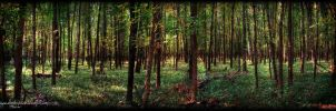Forest For the Trees by ellysdoghouse