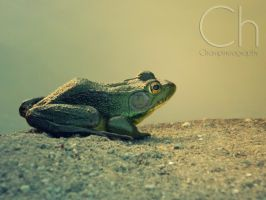 Ribbit by Champineography