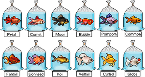 PixelFish Goldfish Display (Animated) - Closed by thetauche