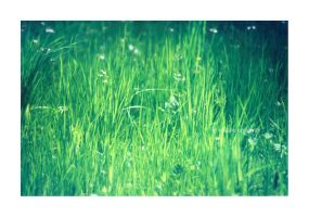 grass01 by greenday862