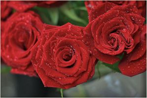 Roses by Jazzoline