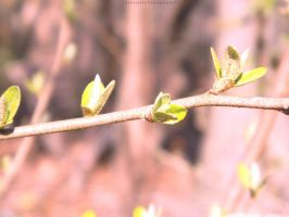 Four Buds Closer to a New Beginning by JohniJohn