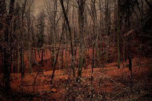 dark forest by pauljavor