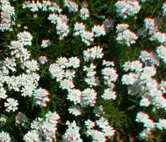 Flowers (anaglyph) by EliteJohan
