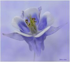 Columbine 42 blue by Deb-e-ann