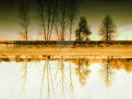 Reflecting on Trees by VividThorn