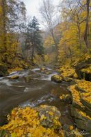 Autumn Rapids II by JohnMeyer