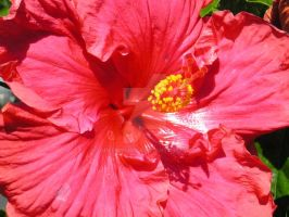 Hibiscus 2 by GreenMusic