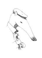 The Anteater by pachryso