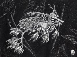 Leafy Sea Dragon in Ink by DanielleJensen