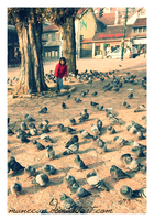 Chasing Pigeons by munecaa