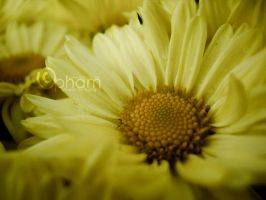 Naturally Golden I by LineGrass