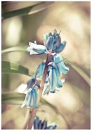 BlueBell by In5omn1ac