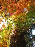 Fabulous Automn Colors and Majestic Tree by Lissou-photography