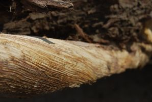 TREE BARK STOCK 4 by Theshelfs