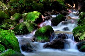 the stream by SAMLIM