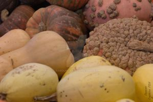 Pumpkins and Gourds #1 by agbduncan