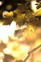 Autumn 2010 2 by lonesomeaesthetic
