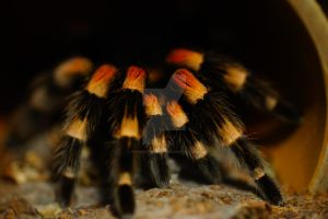 Legs of the Smithi by Hyperborean1987