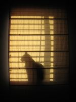 Cats Takeover - The Window by LPDisney