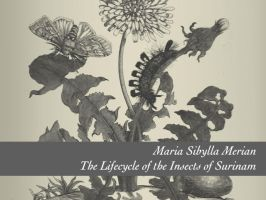 Merian: Plants and their Pests by remittancegirl