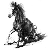 Horse Drawing by L235