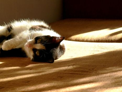 cat basking in the sun by elevor