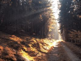autumn road 8 by FrantisekSpurny