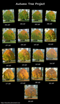 Autumn Tree Project by Karuchna