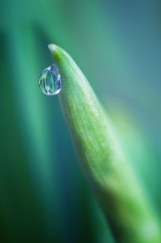 Drop II by Aurelien-Minozzi