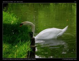 IMPRESSIONS OF NATURE 016 by Bispro