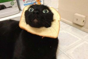 Cat breading!! by uska91