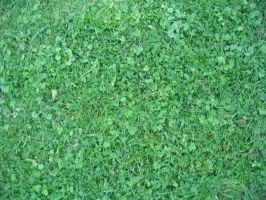 Grass 02 - aphasia100stock by aphasia100stock