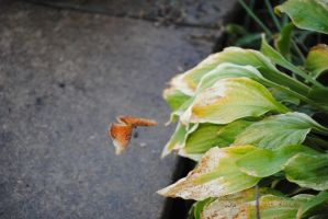 butterfly4 by Mrs-Mims