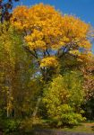 October in the Aviators' Park II by starykocur