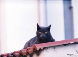 Black cat on fence by mmariang