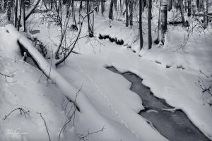 Snowy River by Pajunen
