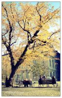Autumn of Geneva by thanhdad