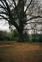 Graves, a tree, and a bench. by Cartersauce