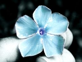 blue flower by kgirl1144