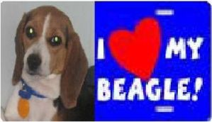 i heart my begal by Tokio-Lover