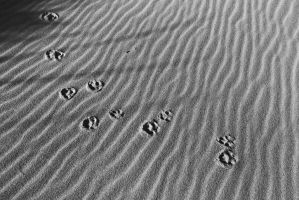 Footprints in the Sand by EvaMcDermott