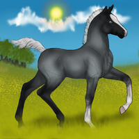 Silver in the meadows by HBPtje