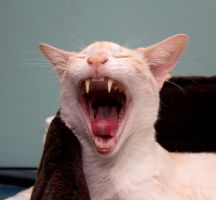 The yawning series - 1 by NickiStock