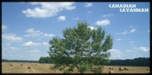IACE Scenary: Canadian Savanna by I-Am-Canadian-Eh