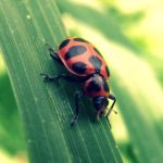 red bettle by fluffylink