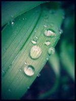 Raindrops II by xamorfati