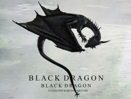 E S Black dragon by Elevit-Stock