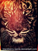 7/2-2014:Tiger(Panthera tigris) by Blackberry-sama